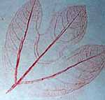 Camping Crafts - Leaf Prints